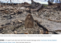 USA: Huragan Harvey zniszczył ich dom. Ocalała tylko figura Matki Boskiej