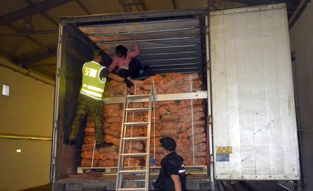 W tirze z ładunkiem drewna opałowego próbowało dostać się do Polski dziewięcioro obywateli Wietnamu. Próbę nielegalnego wjazdu do naszego kraju udaremnili wspólnie w Budzisku (Podlaskie) pogranicznicy i celnicy. Zatrzymano też kierowcę ciężarówki.