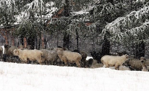 Turyści, miejcie się na baczności - ostrzegają ratownicy Tatrzańskiego Ochotniczego Pogotowia Ratunkowego. W wysokich partiach Tatr spadł śnieg. Niżej pada deszcz i jest bardzo zimno.