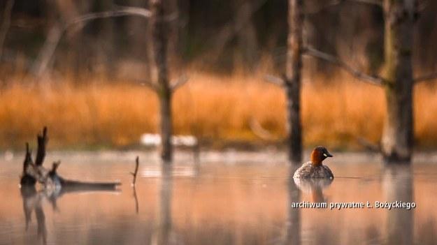Łukasz Bożycki jest biologiem i fotografem przyrody. Jego specjalność to zdjęcia zwierząt. Skąd wie, gdzie znaleźć rzadko spotykane ptaki? Dlaczego zwierzęta są dla niego tak wdzięcznym tematem do fotografowania? (Dzień Dobry TVN/x-news)