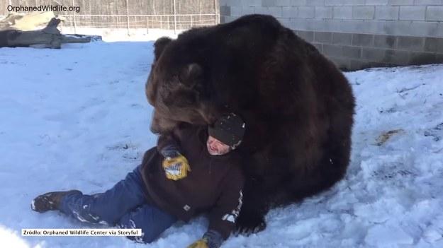 Jim ma bardzo nietypowego przyjaciela, którym jest niedźwiedź Jambo. Oto jak bawią się na śniegu. (STORYFUL/x-news)   UWAGA! Ze względu na przepisy licencyjne materiał dostępny tylko na terytorium Polski.