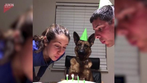 Para postanowiła zrobić coś specjalnego dla swojego pupila, który obchodził 4 urodziny. Wyprawili mu imprezę urodzinową, w której nie zabrakło odśpiewania sto lat oraz ciasta.