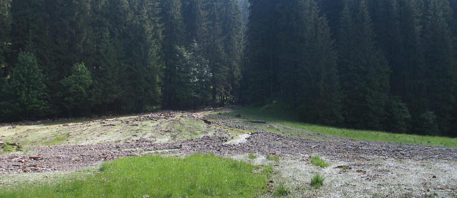"""Policjanci z psem tropiącym oraz ratownicy TOPR przeszukują okolice Doliny Roztoki w Tatrach, gdzie w ubiegłym tygodniu odnaleziono ludzkie szczątki. """"Szeroko zakrojone działania skierowane są na poszukiwanie ewentualnych śladów, np. kolejnych kości lub rzeczy osobistych, mogących pomóc w identyfikacji (...). Poszukiwania obejmą duży obszar. Wszystko wskazuje bowiem na to, że przez lata szczątki, jak również odzież i rzeczy osobiste ofiary mogły zostać rozwleczone przez dzikie zwierzęta"""" - poinformował rzecznik prasowy Komendy Wojewódzkiej Policji w Krakowie Sebastian Gleń. W akcji bierze udział blisko 20 osób."""