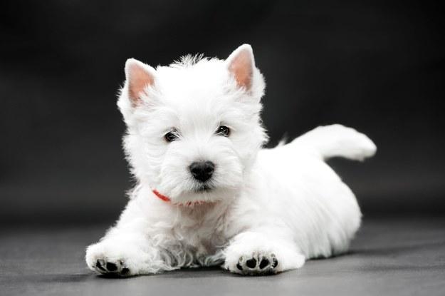 Dlaczego psy robią kółka, zanim się położą? Oto powód!
