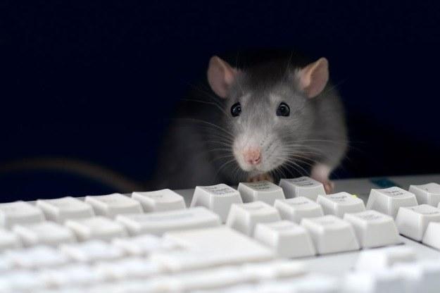 Skuteczne sposoby na pozbycie się myszy!