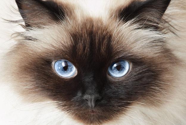 Koty kochają tylko takich ludzi!