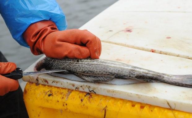 Polska bardziej proekologiczna od Szwecji. Przegrała jednak w głosowaniu wobec agresywnej polityki rybackiej Sztokholmu. Komisja Europejska była po stronie Szwedów.