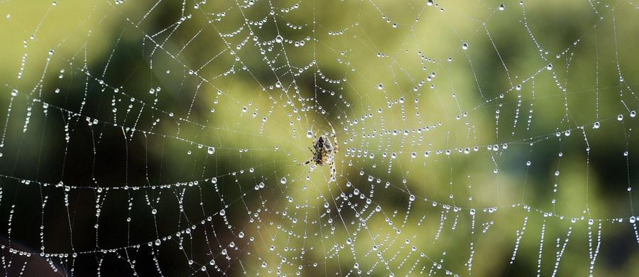 Pewien mieszkaniec stanu Arizona próbował pozbyć się pająków w swoim domu i postanowił wykorzystać do tego palnik do lutowania. Przypadkiem spowodował pożar, który zniszczył cały dom.