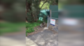 Mały koala uratowany z opresji przez swoją mamę