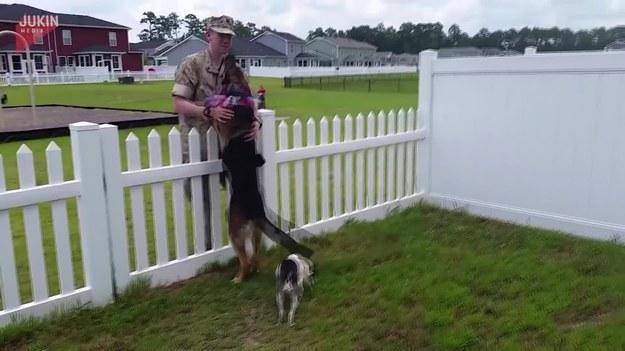 Filmy tego typu zawsze podbijają sieć. W tym przypadku nie jest inaczej. Siedem miesięcy bo tyle trwała ich rozłąka. Pies był tak ucieszony na widok mężczyzny, że nie dawał mu nawet wejść na podwórko. Kiedy w końcu udało mu się pokonać bramkę wpadli sobie w uściski.