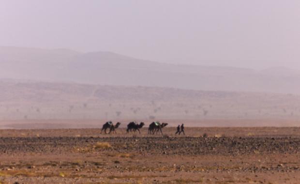 Trzy dni biegów terenowych po Saharze oraz dwa biwaki w namiotach rozbitych na pustyni. To czeka zawodników RMF4RT OCR podczas Runmageddonu Sahara! W połowie marca 2018 roku znajdą się w grupie około 150 entuzjastów biegów ekstremalnych, którzy zmierzą się z wyzwaniami, jakie postawią przed nimi organizatorzy biegu terenowego w południowym Maroku.