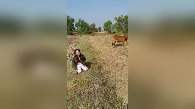 Chcesz pojeździć, wybierz konia. Jeśli wybierzesz inne zwierzę, np. krowę, to możesz skończyć tak jak ta dziewczyna.