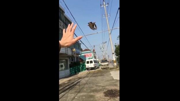 Ten filmik wywołał furorę w internecie. Widać na nim oposa, który skaczę na rękę swojego właściciela. Urocze i niesamowite! Koniecznie.