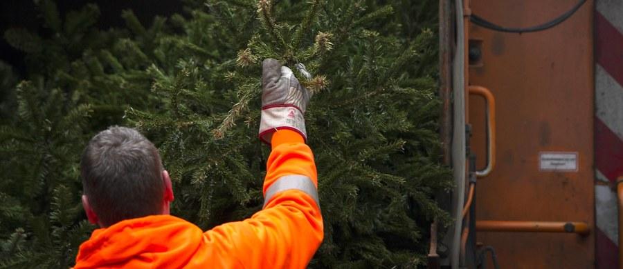 Między innymi w Szczecinie, Krakowie i Warszawie ruszają akcje odbioru bożonarodzeniowych drzewek. W Krakowie - jak poinformował magistrat - żywe choinki będą zasadzone w parku. Z kolei w stolicy można je przekazać leśnikom, którzy posadzą je w lesie. Drzewek nie należy wyrzucać bezpośrednio do kontenera, w większości przypadków wystarczy zostawić je w przydomowej lub osiedlowej altance śmietnikowej.