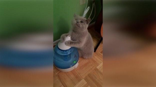 Dla tego kota nawilżacz powietrza okazał się przeciwnikiem nie do pokonania. Zwierzę za wszelką cenę próbowało zatrzymać wylatującą z urządzenia parę, jednak wszelkie próby spełzły na niczym. (STORYFUL/x-news)