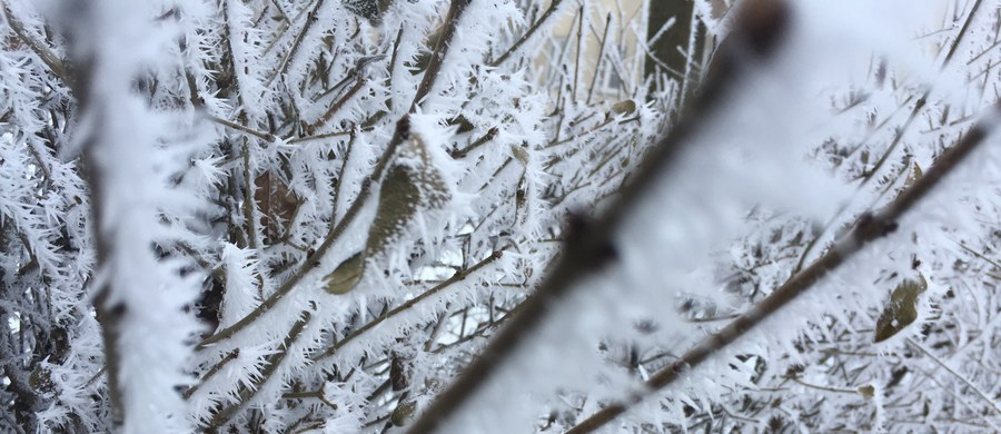 Dwie osoby zmarły minionej doby z powodu wychłodzenia organizmu - poinformowało Rządowe Centrum Bezpieczeństwa. Jedna z osób zmarła w województwie mazowieckim, druga w Lubuskiem. W związku z silnym mrozem w całym kraju obowiązuje pierwszy stopień zagrożenia.