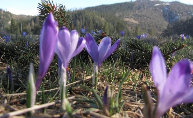 Z ociąganiem, ale jednak. Powoli nadchodzi wiosna. W najbliższy weekend będzie słonecznie i dość ciepło.