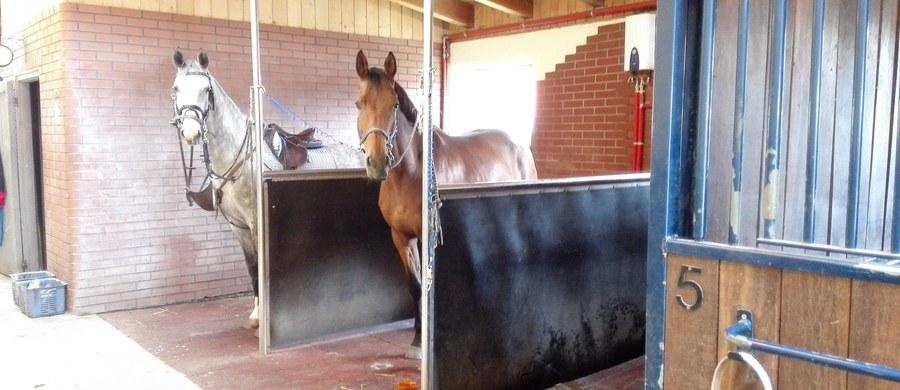 Śledztwo w sprawie rzekomej niegospodarności w stadninie koni w Janowie Podlaskim zostało przedłużone do 9 października - dowiedział się reporter RMF FM, Krzysztof Kot. To decyzja Prokuratury Krajowej, podjęta na wniosek Prokuratury Regionalnej w Lublinie.