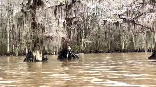 Zima przyniosła niesamowity widok odwiedzającym jezioro Fausse Pointe w Luizjanie.