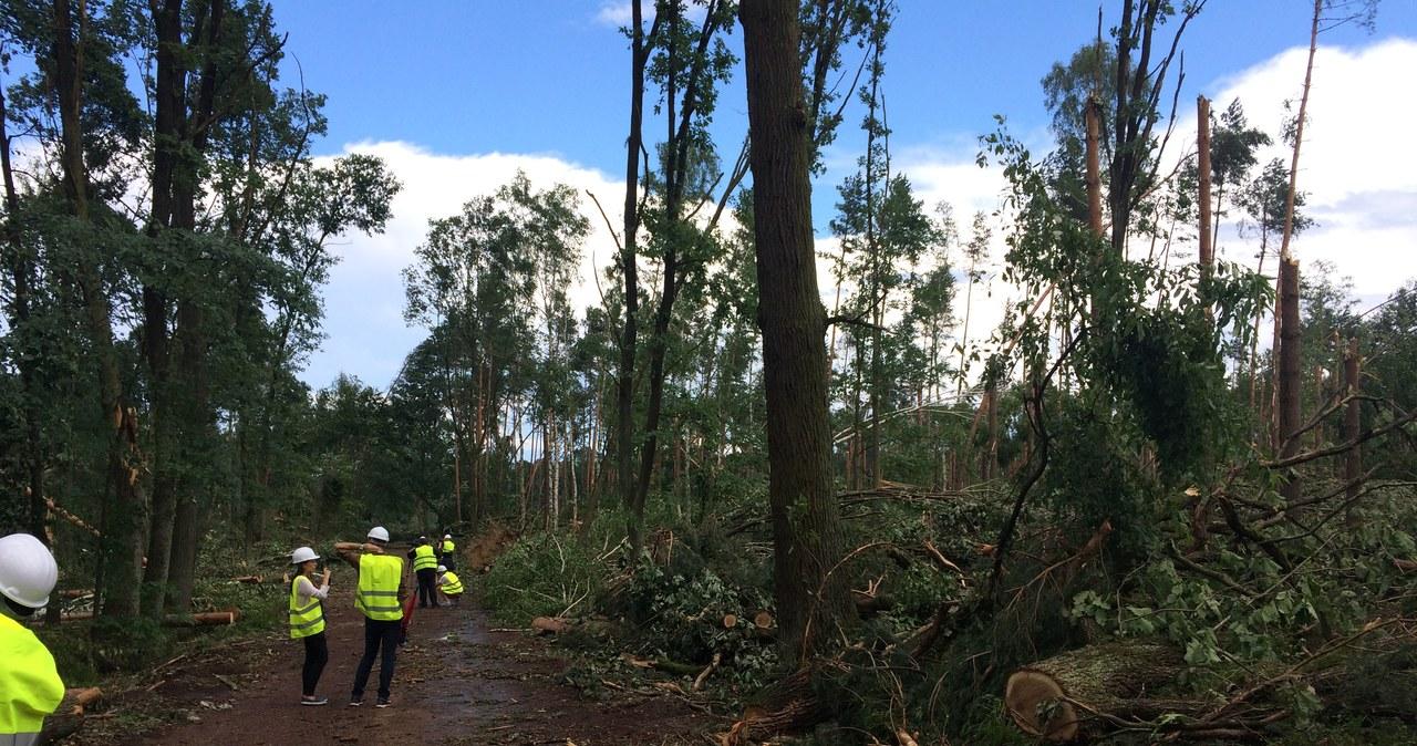 1,5 roku potrwa porządkowanie lasu w nadleśnictwie Rudy Raciborskie