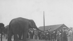 14 czerwca 1927 r. Miejski Ogród Zoologiczny w Warszawie