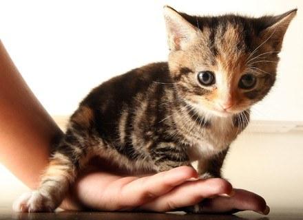 17 lutego koty mają swoje święto! /Getty Images/Flash Press Media