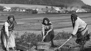 23 listopada 1915 r. Racjonowanie żywności w Krakowie