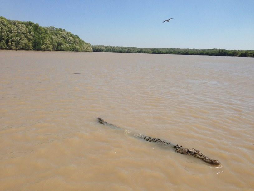 26-latek zginął zaatakowany przez krokodyla /PAP/EPA