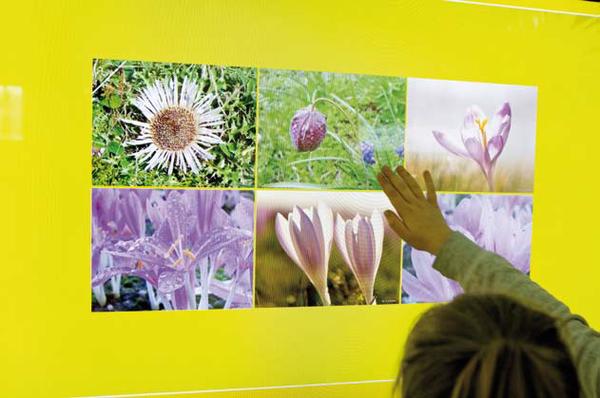 Multimedia w atrakcyjny sposób przekazują wiedzę o najcenniejszych gatunkach roślin