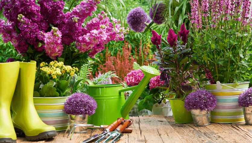 8 powodów, by przyciąć rośliny