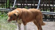 87-latek pogrzebał w ogródku 130 psów