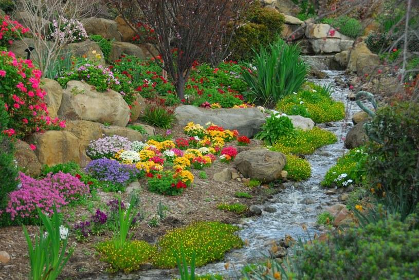 Aby obsadzić ziołami skalniak, kup sadzonki w doniczkach (najlepiej z ekologicznych upraw) albo samodzielnie wysiej nasionka. /123RF/PICSEL