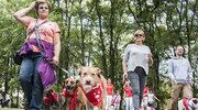 """""""Adopcinki 2016"""" czyli pierwsze urodziny programu"""