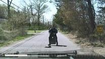 Agresywny żółw na środku drogi. Policjant musiał bronić się tarczą