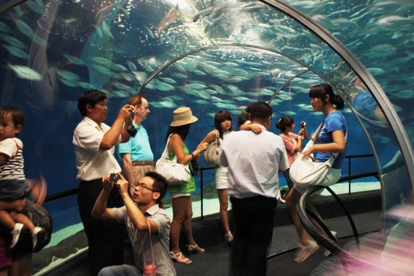 Akwarium w Szanghaju /123RF/PICSEL