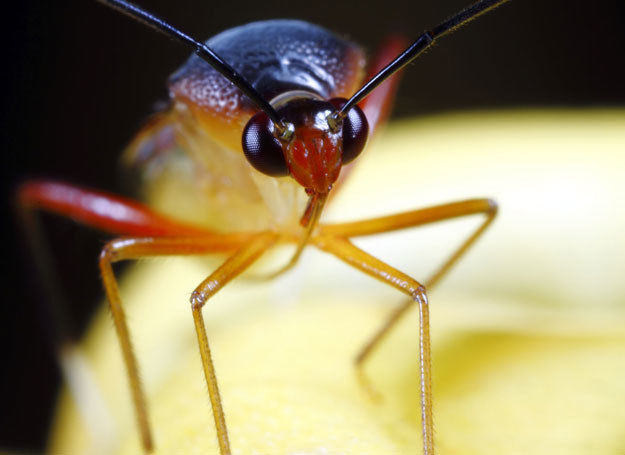 Alergicy powinni mieć przy sobie zestaw interwencyjny /©123RF/PICSEL