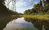 Amazonia, Laguna Chica /Encyklopedia Internautica