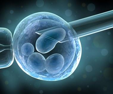 Amerykanie eksperymentują z ludzkim zarodkiem