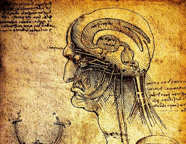 Anatomiczne szkice Leonarda DaVinci /©123RF/PICSEL