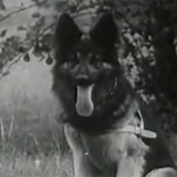 Bej miał swoich psich dublerów /YouTube