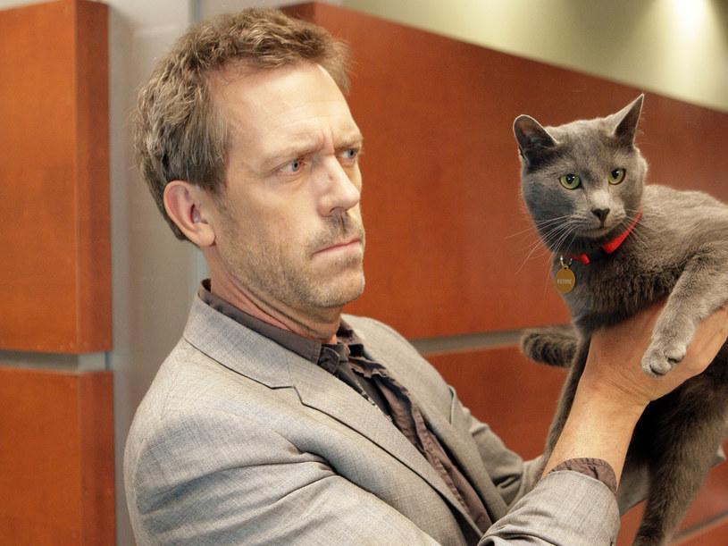 Czy Hugh Laurie umie grać na kocie, jak na kobzie? /Canal+ /materiały prasowe