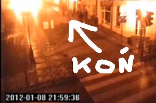 Incydent wzbudził dyskusję na temat luk w polskim prawie, które m.in nie zabrania jednoznacznie jazdy konnej miejskimi deptakami po pijaku /