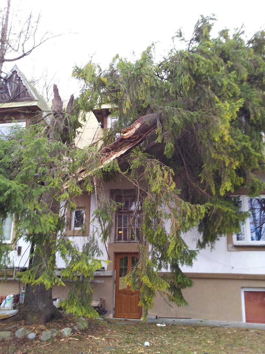W Zakopanem wichura łamie drzewa /Maciej Pałahicki /RMF FM