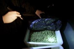 """""""Fabryka"""" marihuany zlikwidowana pod Poznaniem"""
