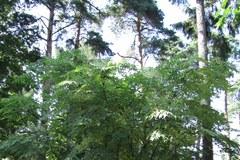 Arboretum i Alpinarium w Rogowie