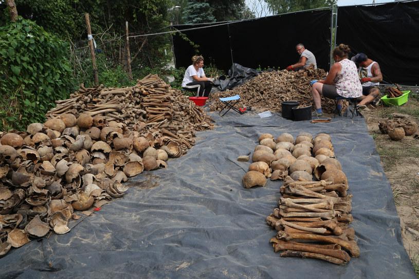 Archeolodzy pracują na miejscu odkrycia /Joanna Borowska /Agencja FORUM