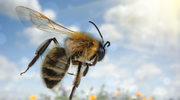 Atak alergii na urlopie