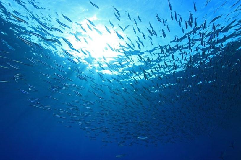 ATLAS - największy program badawczy morskich głębin właśnie ruszył /123RF/PICSEL