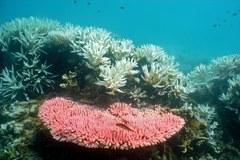 Australijska Wielka Rafa Koralowa pełna cudów