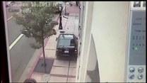 Auto pędziło na wstecznym! Pies przewodnik uratował kobietę i mężczyznę!